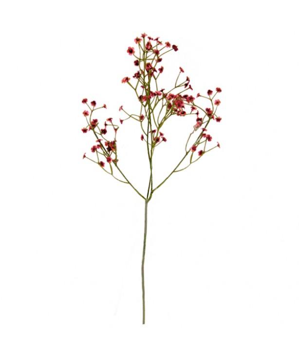 Гипсофила, винный цвет