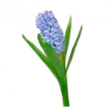 Гиацинт 38 см, синий
